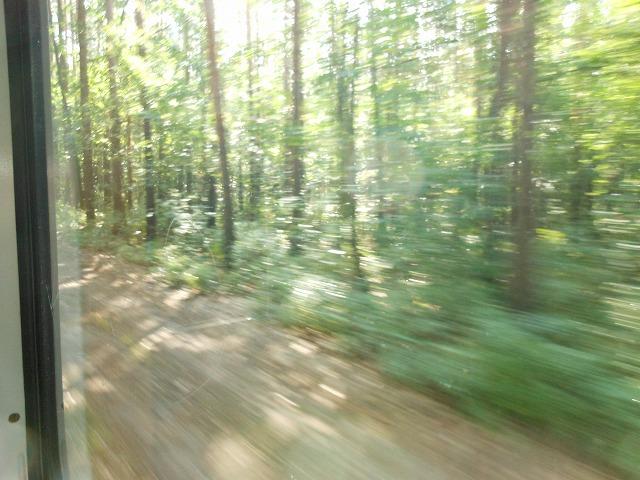 トラム87系統から森を眺める