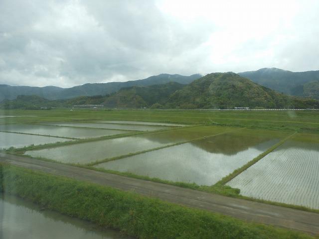田植えのころの水田