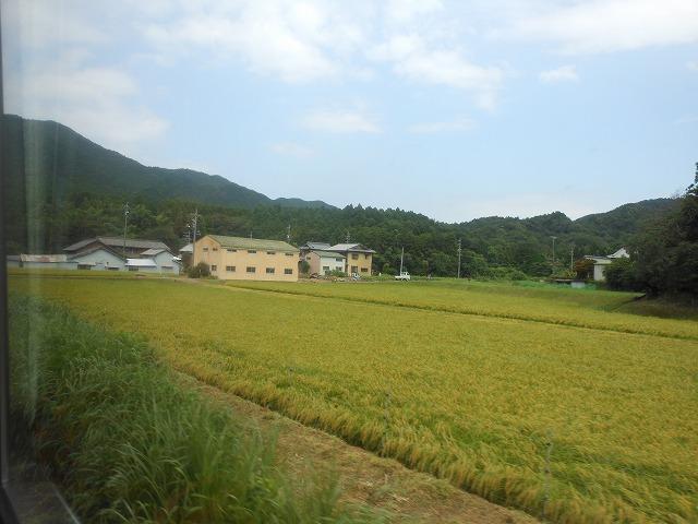 関西線:水田を行く
