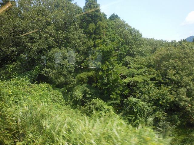 草津線車窓:森林を行く