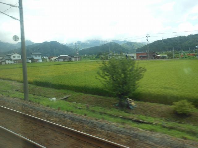 サンダーバードの車窓:福井県の水田